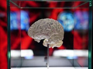 La metástasis cerebral de los pacientes con algún cáncer de tipo nefrourológico ha aumentado. / Fundación Cajasol.