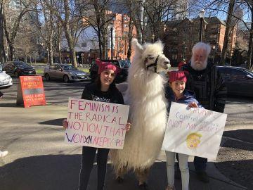 La llama Caesar, en la marcha por la mujer de Portland