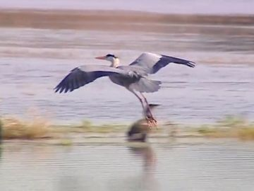 La ganadería extensiva ayuda a mantener las poblaciones de aves migratorias