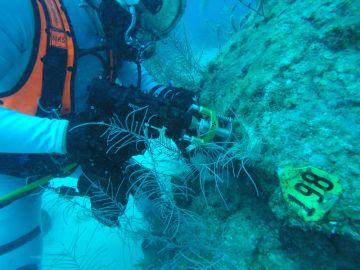 Astronautas se preparan para la Luna y Marte sembrando corales en la Tierra