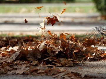 El cambio climático frena la descomposición de nutrientes