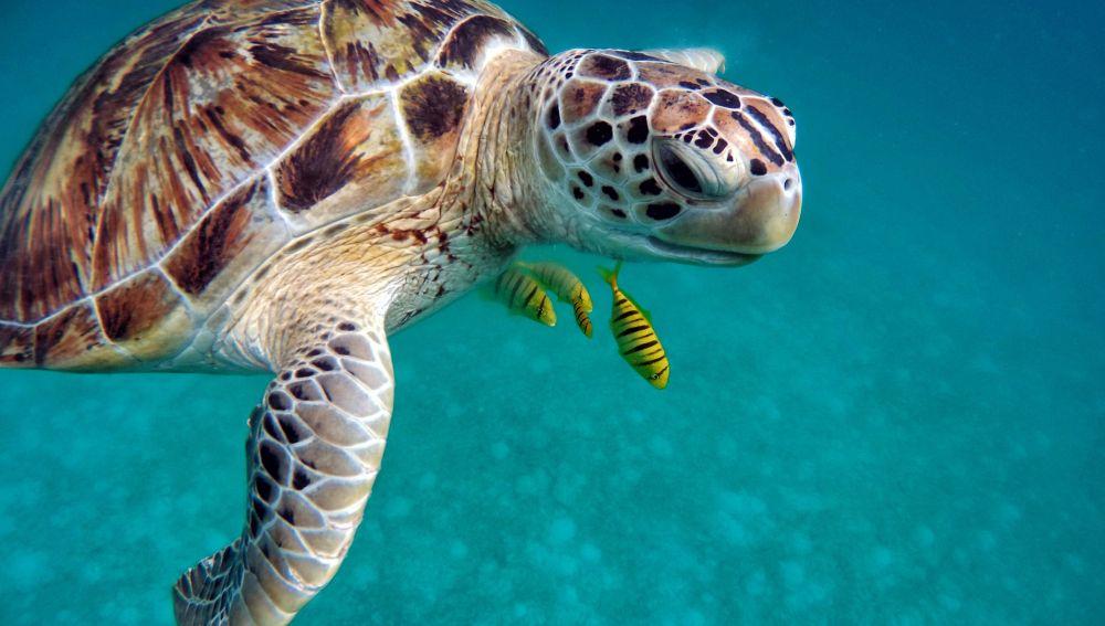 Una tortuga marina