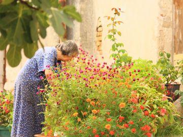 La jardinería ayuda a llevar un estilo de vida más sano y un envejecimiento activo