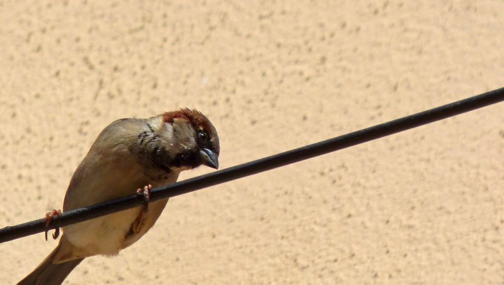 Pájaro en tendido eléctrico