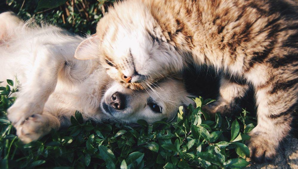 Mascotas domésticas