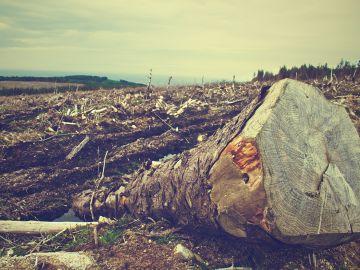 Un bosque deforestado