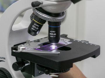 Una muestra examinada a través de microscopio