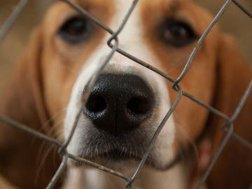 Perro en una protectora de animales