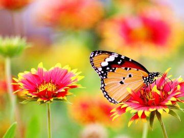 Mariposa en unas flores