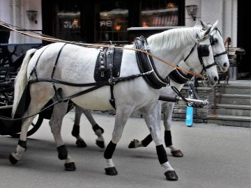 Calesa de caballos
