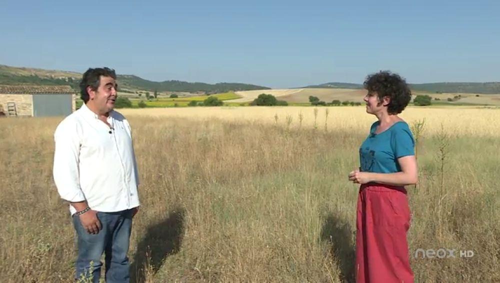 Asistimos a la cosecha de espelta en Sigüenza