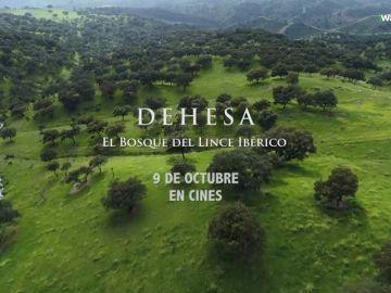 Llega a los cines 'Dehesa. El bosque del Lince Ibérico'