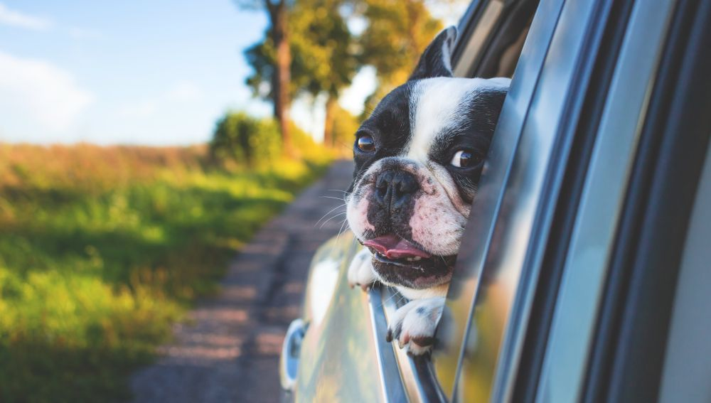 Perro viajando en un coche