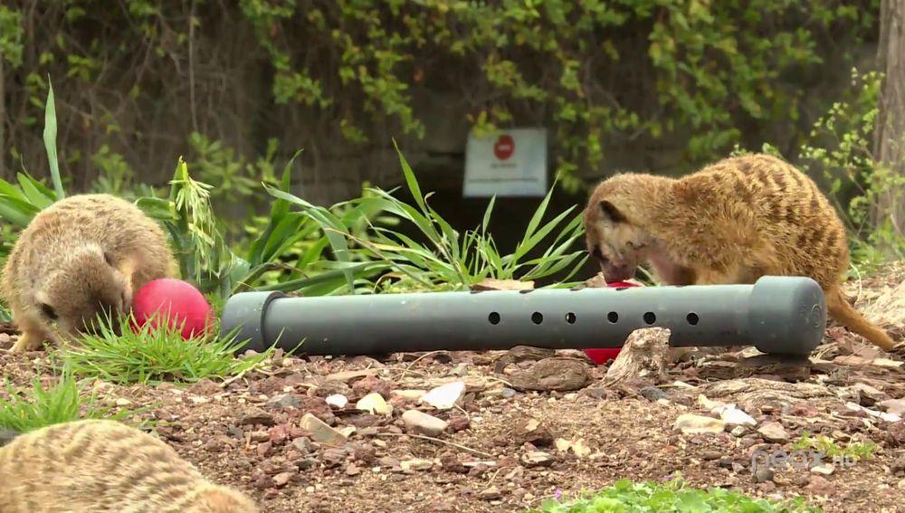 Materiales reciclados para el enriquecimiento sensorial de los animales