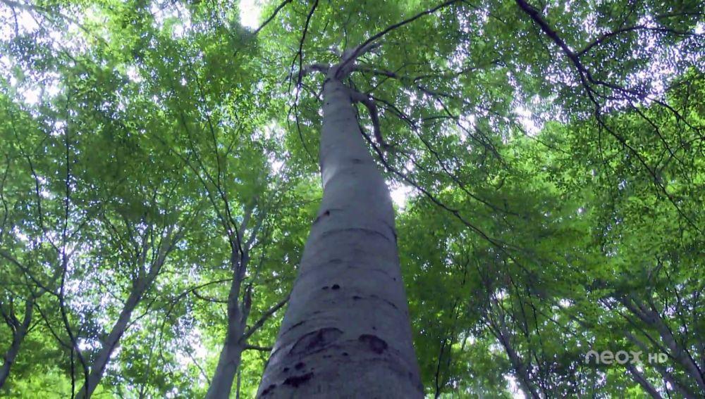 """""""Life Soria Forest Adapt"""", un proyecto para mejorar la calidad y la producción de los bosques"""
