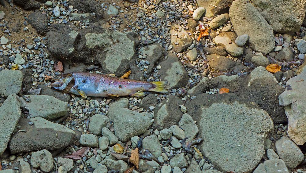 Aparición de peces muertos