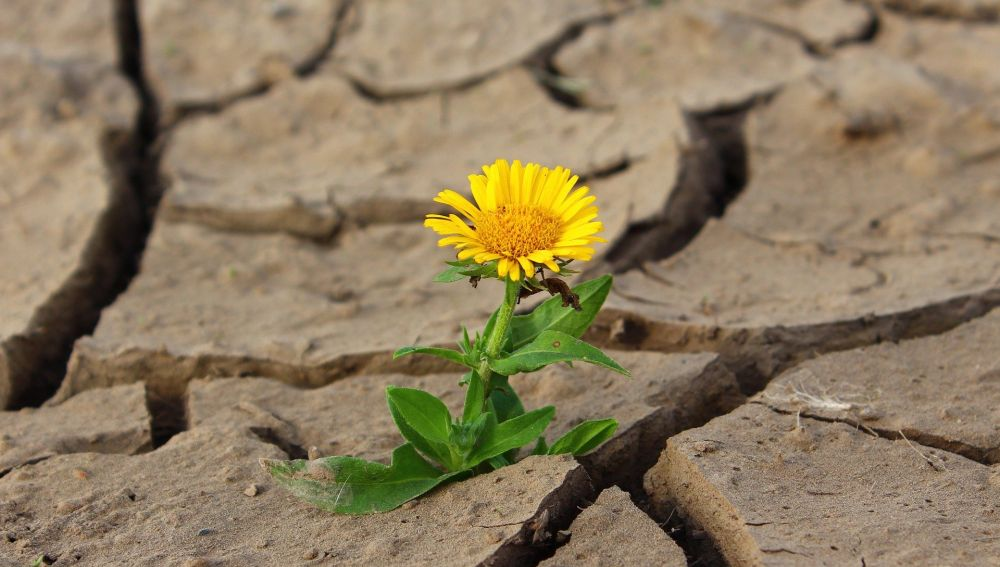 Sequías como consecuencia del cambio climático