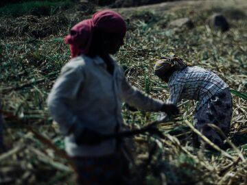 Mujeres agricultoras