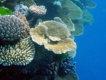 Zona de la Gran Barrera de Coral