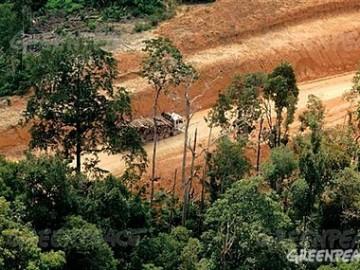 Deforestación empresas