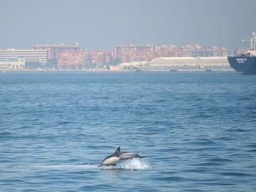 Delfín en la Bahía de Algeciras