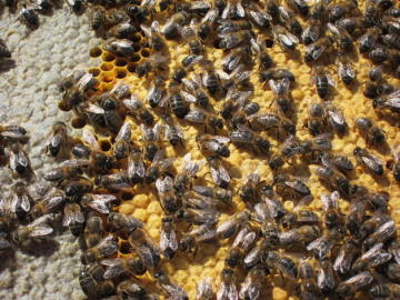 Colmena de abejas