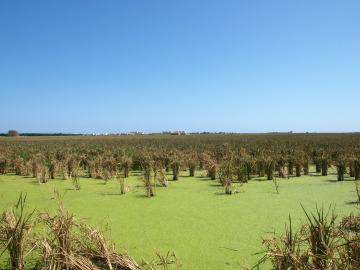 Chilches, agrícola y con historia