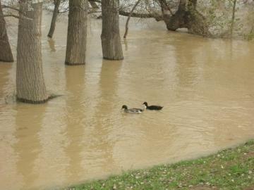 El Ebro desbordado de su cauce