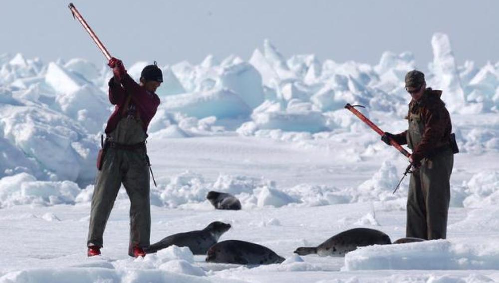 Cazadores de focas en Canadá