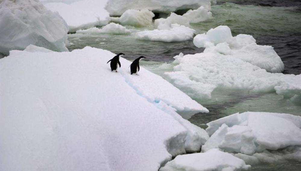 Dos pingüínos en la Antártida