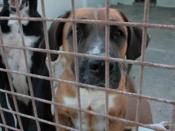 Uno de los perros de la protectora de animales de Valencia
