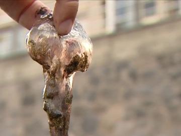 Plaga de medusas en Gran Canaria