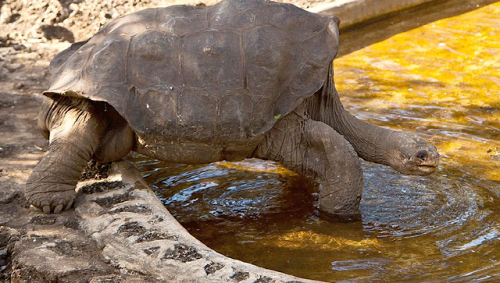 La tortuga George