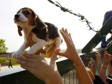 Perro liberado en Green Hill