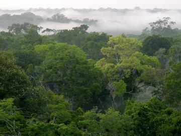 Peligra la biodiversidad de la mitad de las áreas tropicales protegidas