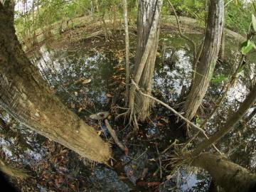 Un manglar del parque nacional Carara en la provincia de Puntarenas (Costa Rica)