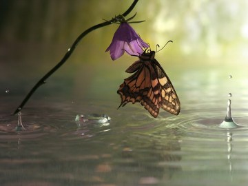 Tiempo para reflexionar: Una mariposa reposa sobre el agua