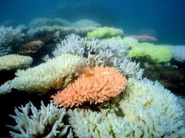 La Gran Barrera de coral de Australia