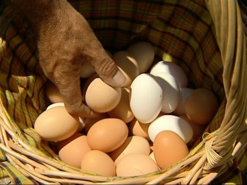 El huevo debe formar parte de nuestra dieta habitual