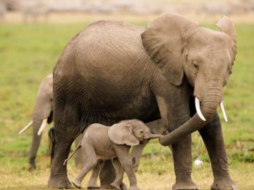 Mamá elefante pasea con su cría