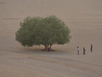 Aumento de la vegetación en los desiertos australianos