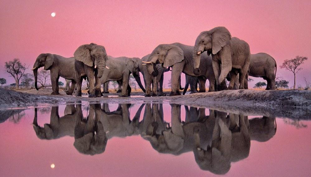 """""""Elefantes africanos al crepúsculo"""""""