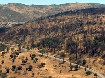 Continúan las labores de reforestación en Robledo de Chavela un año después del incendio