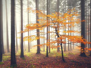 Un árbol otoñal