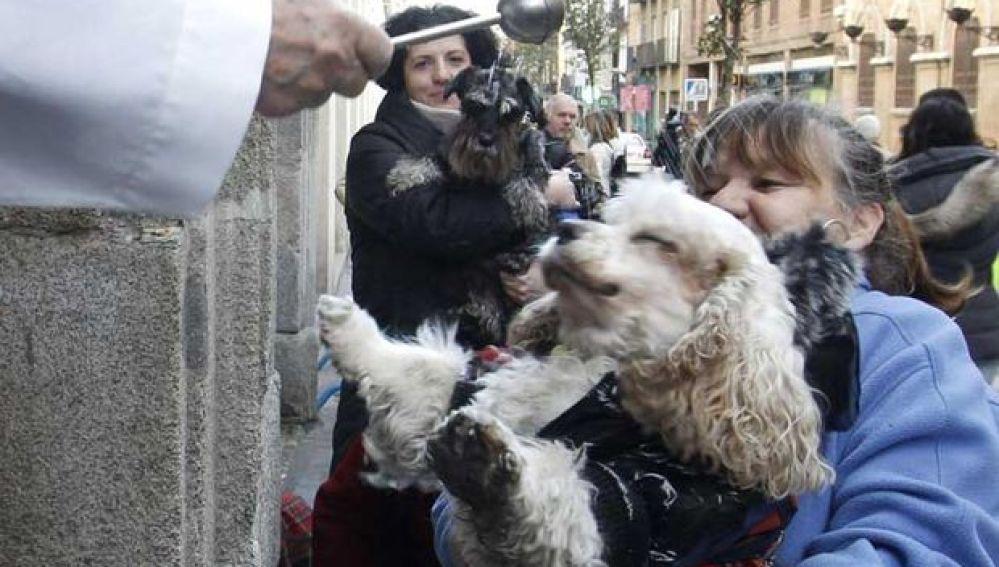 Una mascota recibe la bendición por San Antón