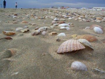 Conchas en la playa