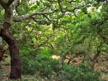 Parque Natural los Alcornocales (andalucía)