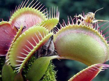 Planta carnívora con insectos