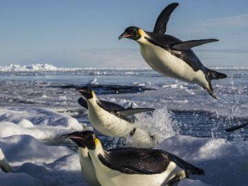 Pingüinos sobre el agua