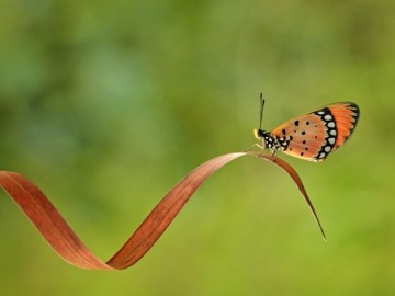 Pequeña mariposa